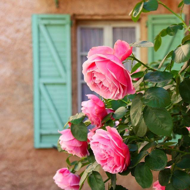 Frases Sobre A Primavera Estação Das Flores