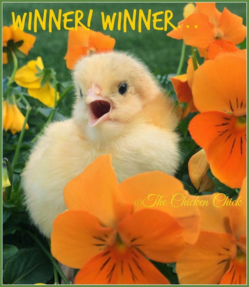 Winner! Winner!