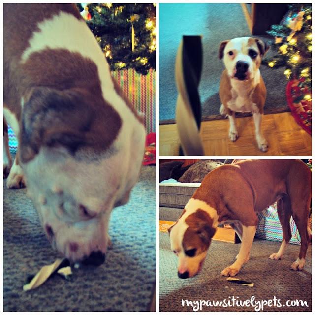 Twistix vanilla mint dog treats from our BarkBox