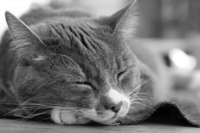 Solución al ejercicio de animales en C++ y Java
