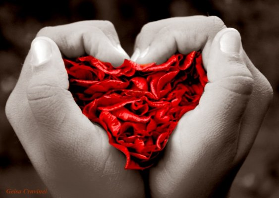 Cupones De Amor. AMOR