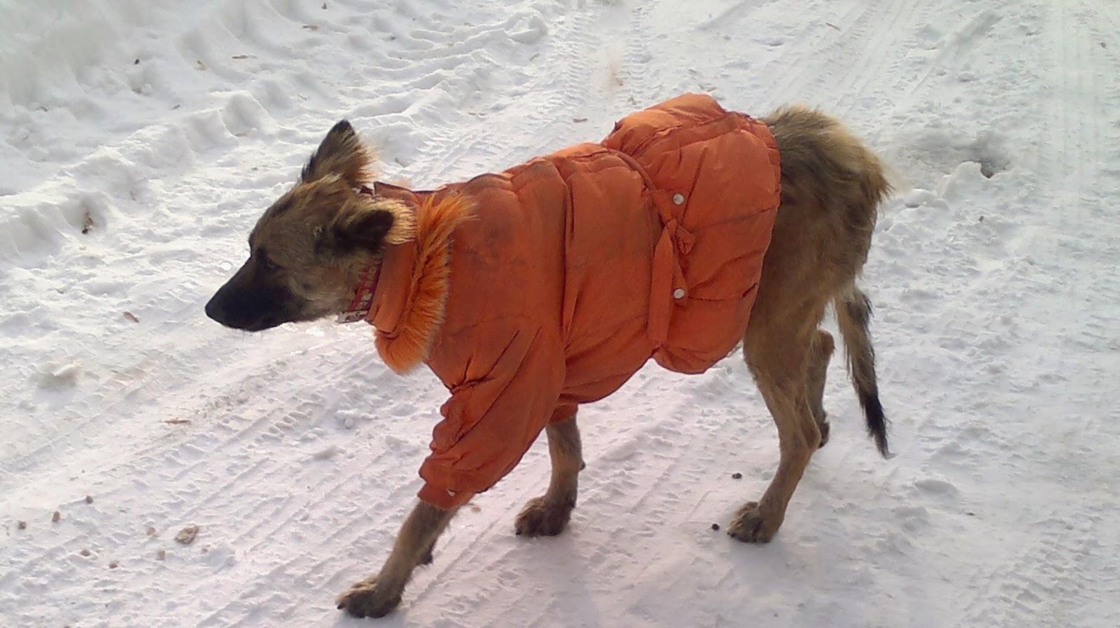 Холодно животным