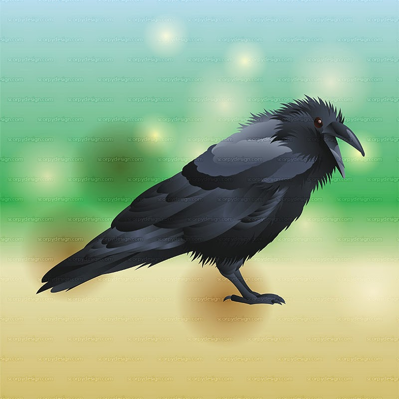 crow vector illustration