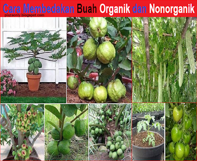 Cara Membedakan Buah Organik dan Nonorganik