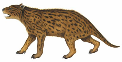 marsupiales extintos de oceania Wakaleo