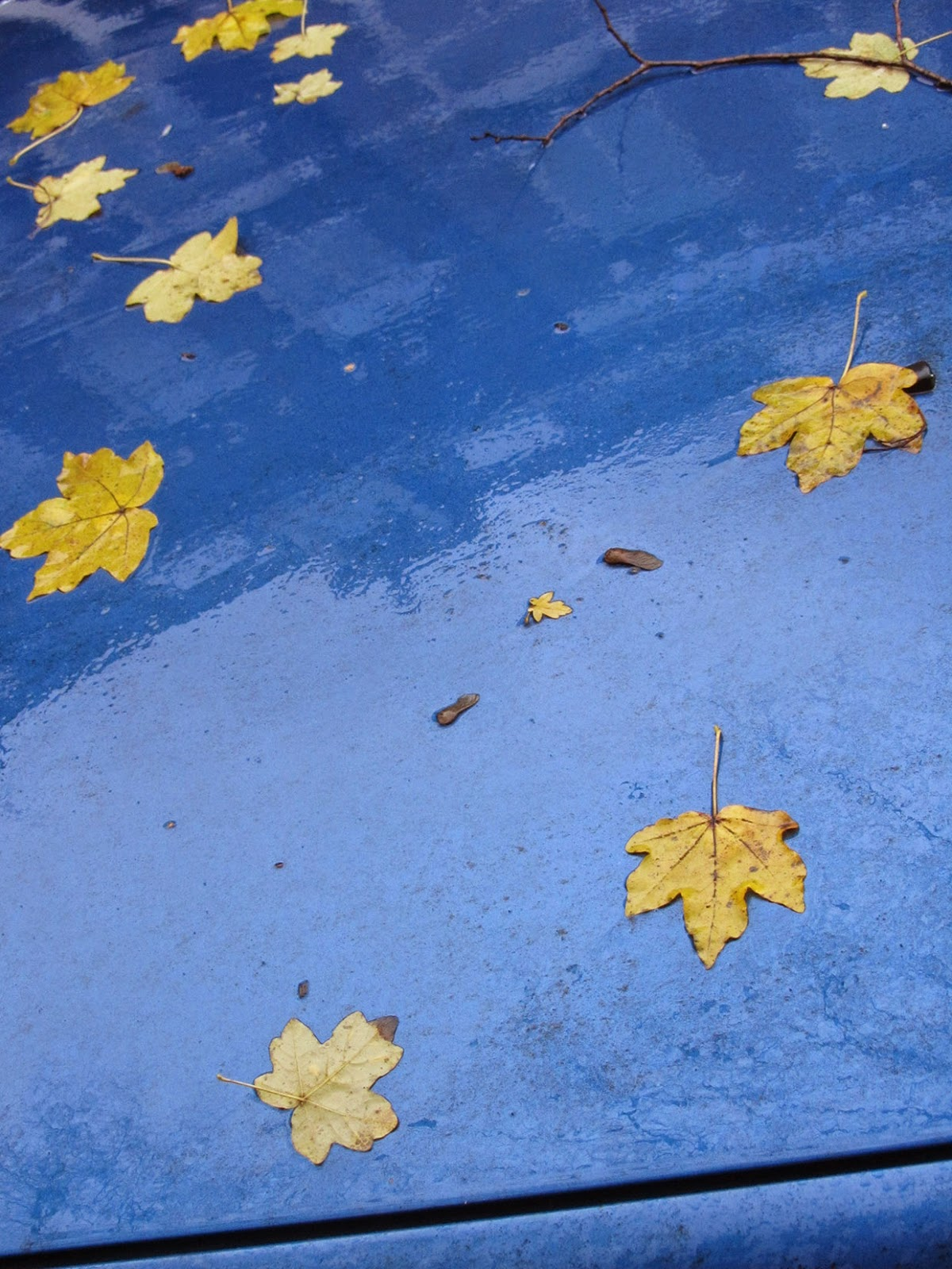 leaves on a blue car