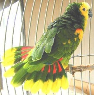 gambar burung indah