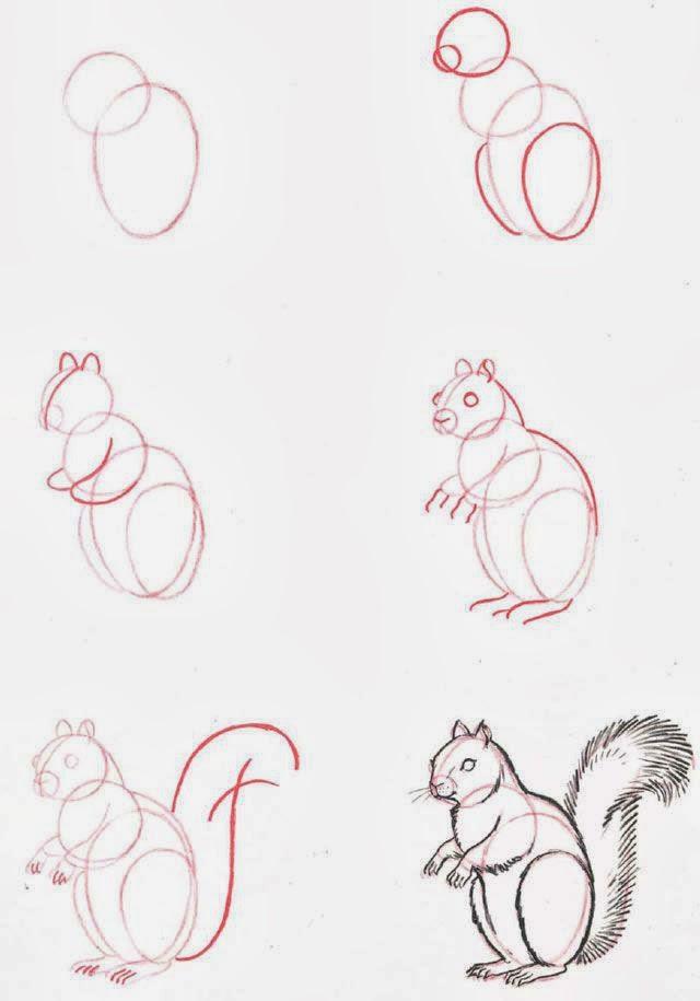 Le coin des enfants apprendre dessiner un cureuil - Ecureuil a dessiner ...