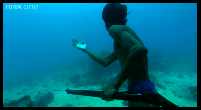 Screen Capture:  BBC One Human Planet series video of Bajau fisherman free-diving over 65 feet (20 meters) to catch a fish