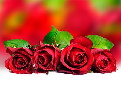 Rosas rojas para el 14 de febrero
