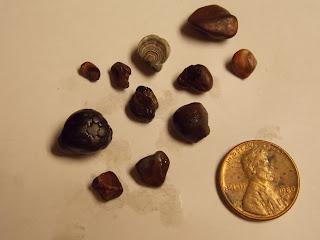 Cassiterite Montana Wood Tin
