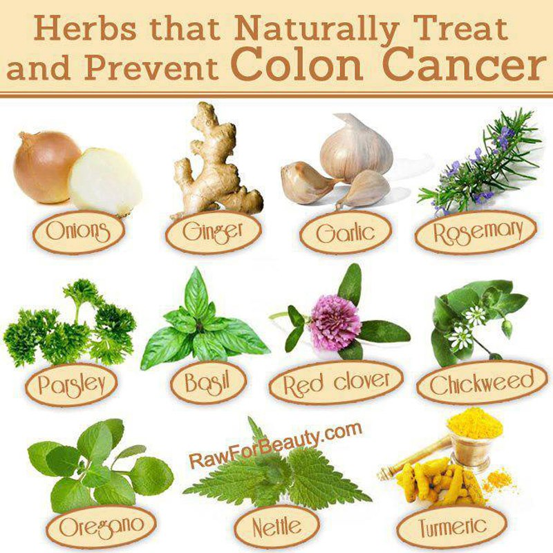 Herbal medicine for colon cancer treatment guidelines