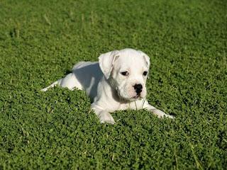 Gambar Anak Anjing Imut