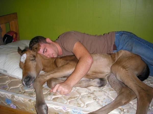 drunk man with a horse