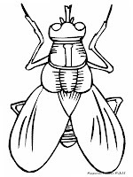 Mewarnai Gambar Lalat, Serangga Yang Sering Hinggap Dimakanan