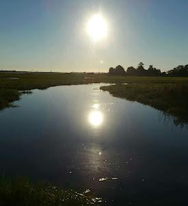 Good morning from the marsh ♡