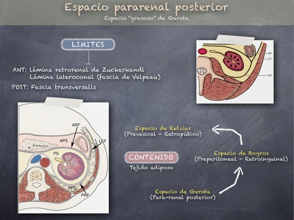 Cuadernos de Anatomía Quirúrgica: Planos y Espacios Extra-Peritoneales.