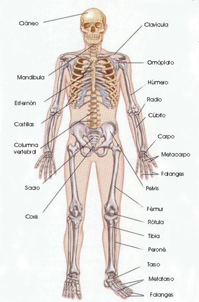 Saber es Salud: Anatomía Básica, el Esqueleto