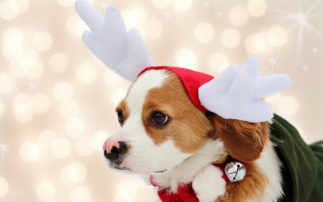 Dog wallpaper christmas