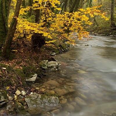 Photo of Fornant river running through the autumn forest