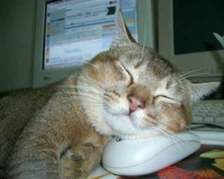 Gato Feliz com o seu rato