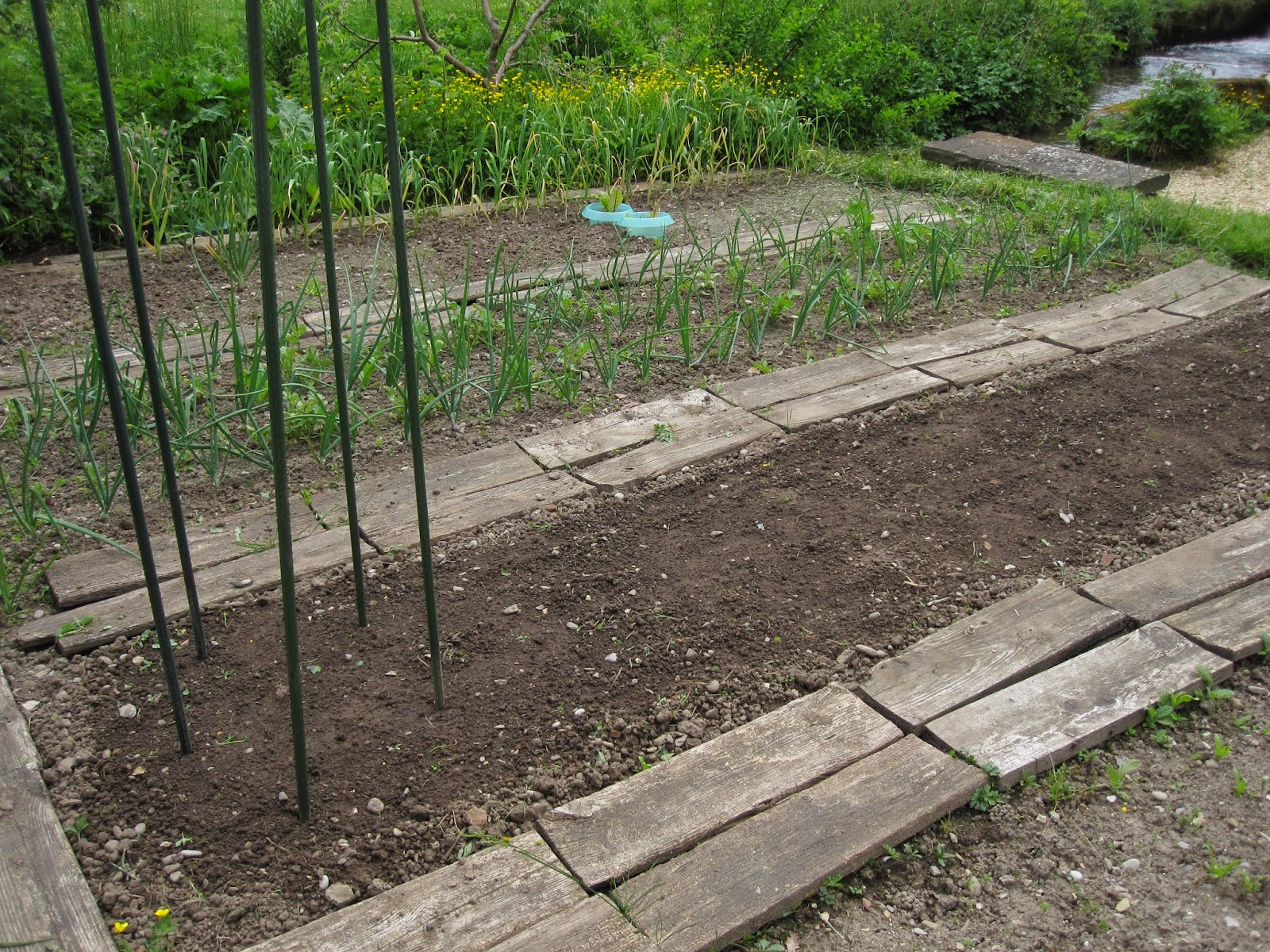 Oele Garten: Bohnen säen und Zuckererbsen aufbinden