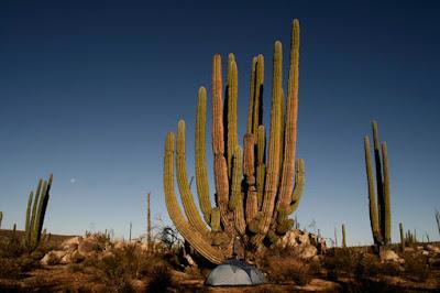 desert mexique