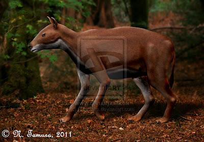 equidae Propalaeotherium