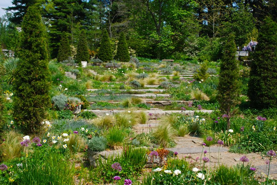 Several daffodils fill these beds, including Narcissus 'Pacific Coast' seen here with the allium. I love the curve to this strong stone path and the full, fluffy planting woven through it. But the whole picture would look like a mess without the strong pillar verticals to frame this view up the hill. Excellent design working with Chanticleer's depth of planting makes for a wonderful garden experience!