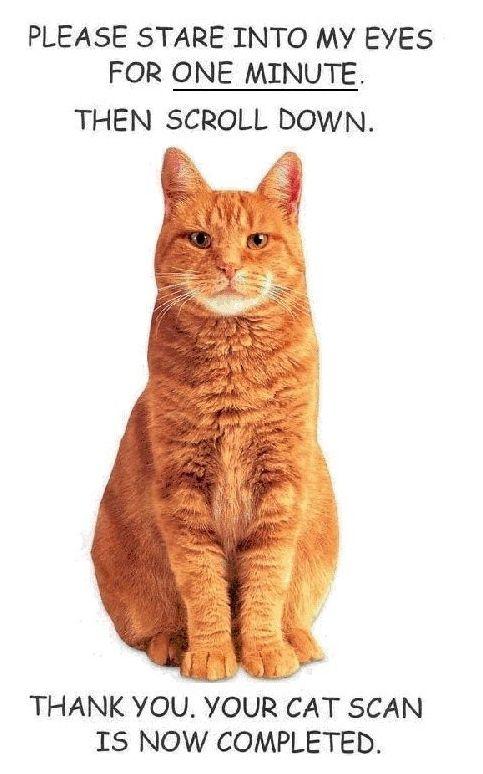 Scanner Cat