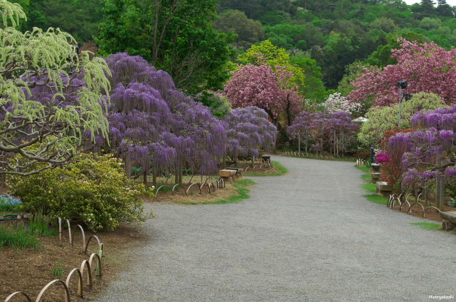сочетание цветов оливковый фото