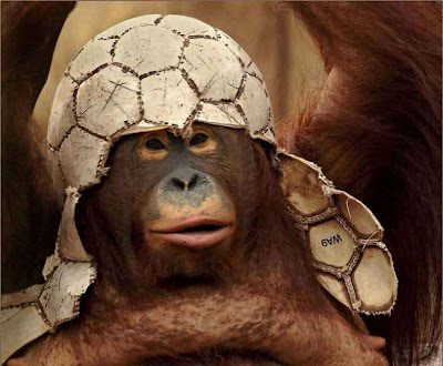 Monkey Helmet Funny Picture