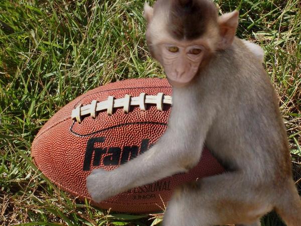 http://4.bp.blogspot.com/-T4lWhaYJGkk/UE1FU46jCeI/AAAAAAAAH00/5e1-0buKNyo/s640/monkeyfingafootball.jpg