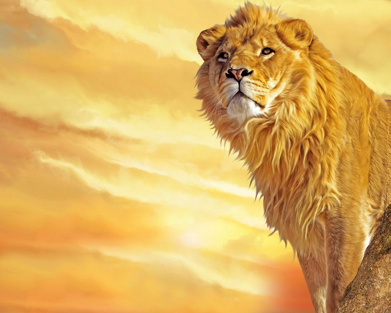 http://4.bp.blogspot.com/-T4qT__OzOvY/Ty-bUBvi7MI/AAAAAAAAEi0/We2CxVJAplw/s1600/lion-wallpapers-hd-lion-wallpaper-00+(2).jpg