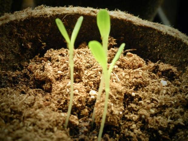 semilla planta tierra crecer brote verde