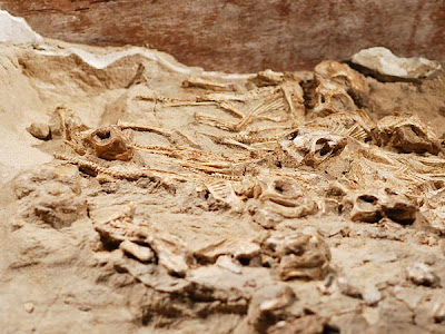 Gorgeous Dinosaur Nest Found Full of Babies Seen On www.coolpicturegallery.us