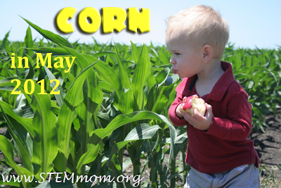 Baby Boy eating apple by a corn field