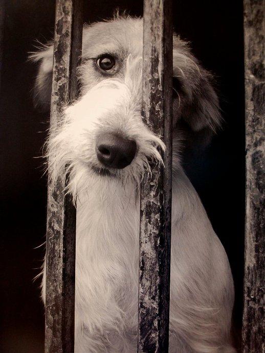Yo Estoy Contra El Maltrato Animal Facebook - fotos de animales maltratados por el hombre