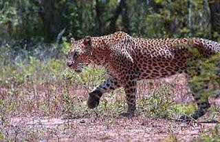 Sri Lanka's first Safari Park at Hambantota