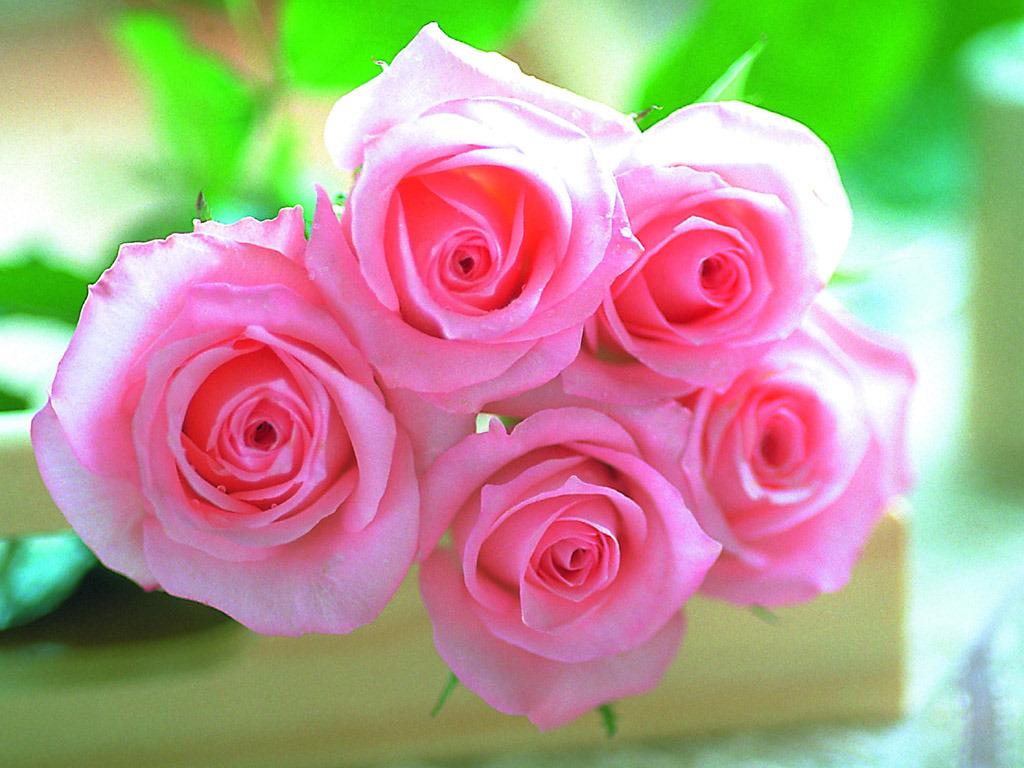 http://4.bp.blogspot.com/-T5jXhBx6cP4/TvhgcNqLTeI/AAAAAAAAA7g/COTVXn6OHm8/s1600/pink-roses-wallpaper_1024x768_15873.jpg