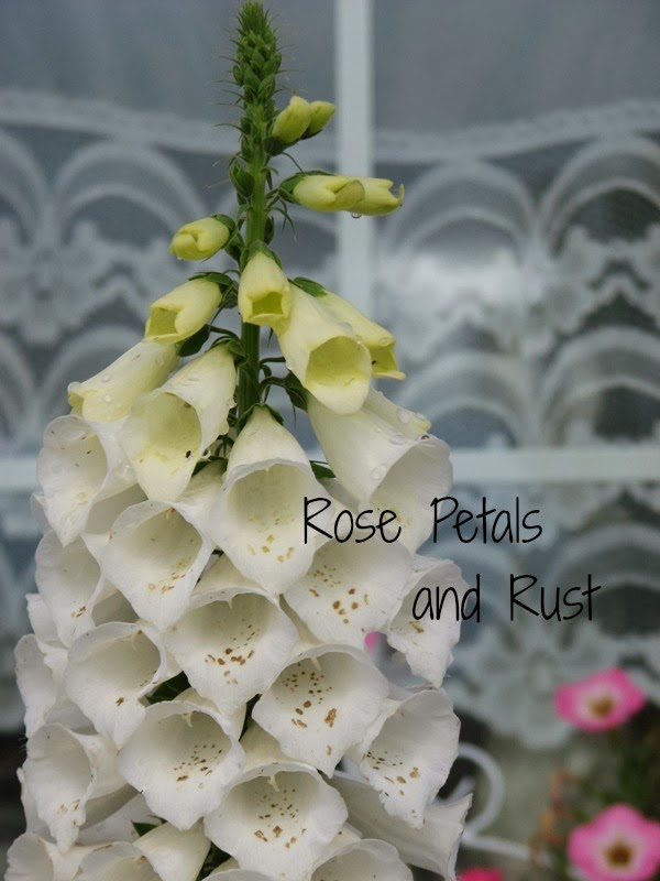 Rose Petals and Rust