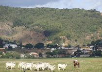 Vaqueiro com rebanho