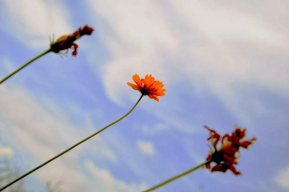 flower, sky, photography,
