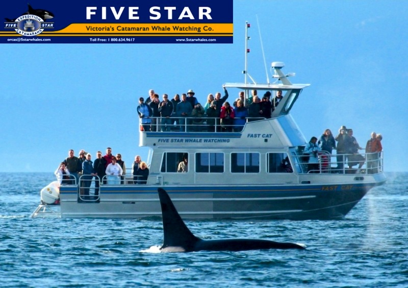 Five Star Whale Watching