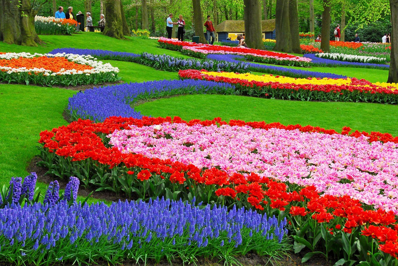 http://4.bp.blogspot.com/-T6irqEGb2Ew/T_ymjK_SbHI/AAAAAAAABLQ/V3FS-r19_yM/s1600/Keukenhof-Flowers-Garden.jpg