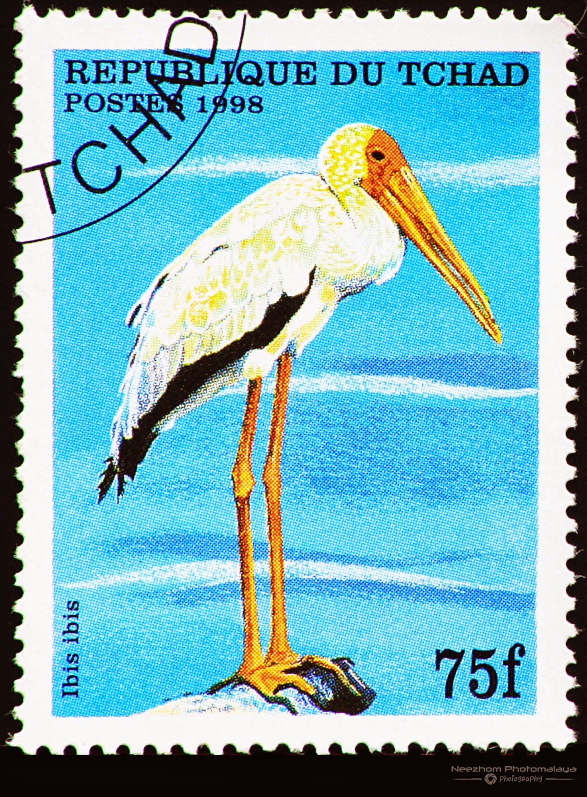 Chad 1998 Birds stamp - Ibis ibis 75 f