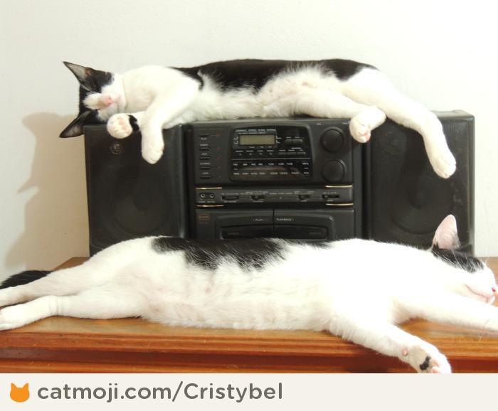 Фото 9 из Catmoji - социальная сеть для котов