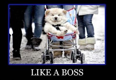 like a dogg boss
