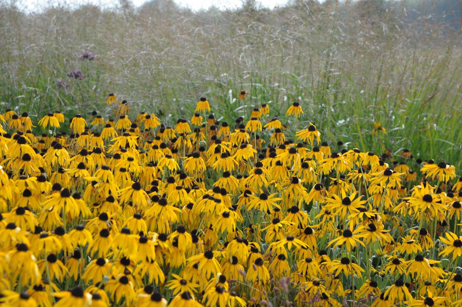 gelbe gartenblumen bestimmen – proxyagent, Gartenarbeit ideen