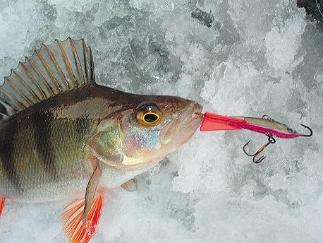 где сейчас ловится рыба в ярославле